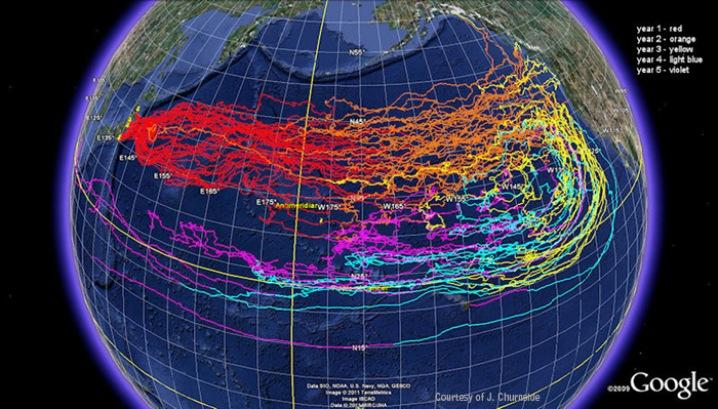 http://www.pbs.org/newshour/rundown/2012/03/tracking-japans-tsunami-debris.html