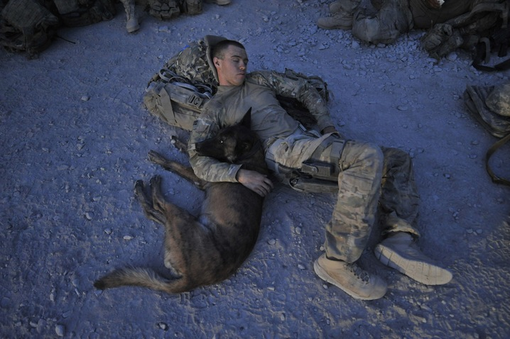 Military Dogs Around the World | PBS NewsHour | May 28, 2012 | PBS