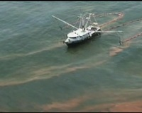 Fisheries Hit by Spreading Oil Contamination Closures in Gulf