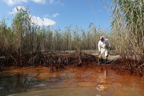 Phil Radford, executive director of Greenpeace USA, inspects oil-covered reeds along the Gulf of Mexico; John Moore/Getty Images