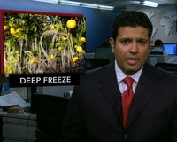 News Wrap: Florida Cold Snap Damages $115 Million in Crops