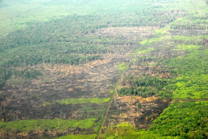 Logging in Indonesia