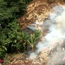'Up in Smoke' Film Examines Perils of Slash and Burn Agriculture