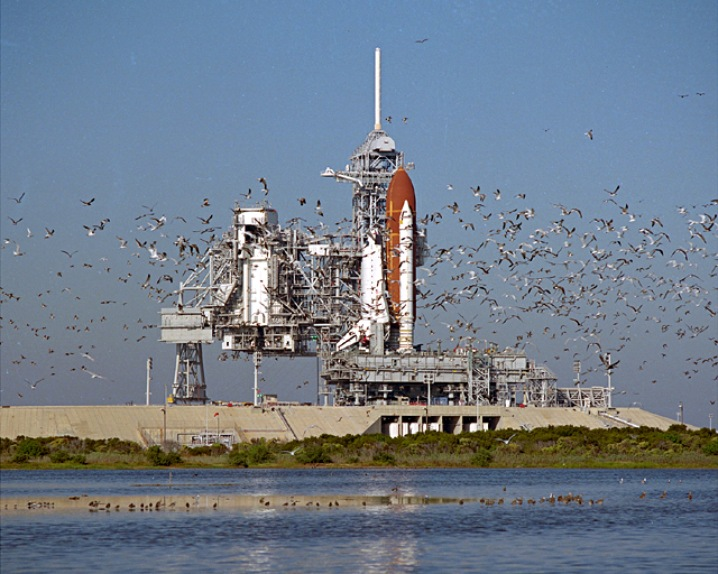 Birds Flock to STS-27