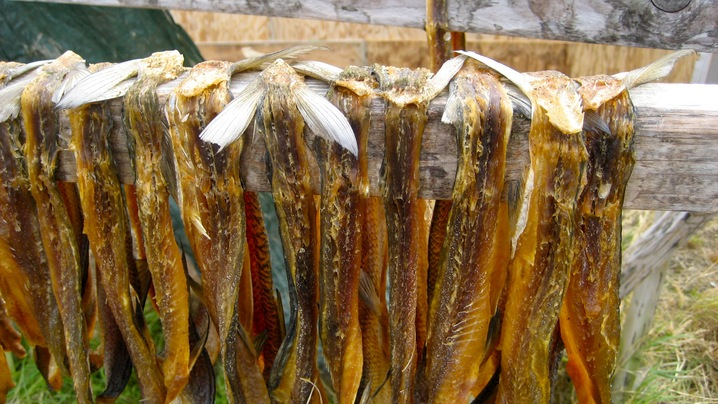 Dried fish for the winter