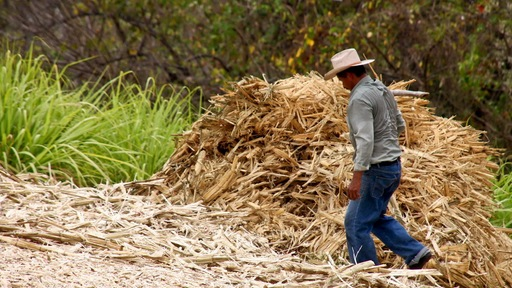 A man working sugar cane fields in El Salvador. Photo by Flickr user Carlos Smith.