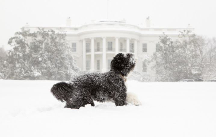 Bo Knows Snow