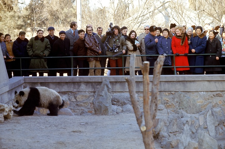 'Panda-monium' in Washington