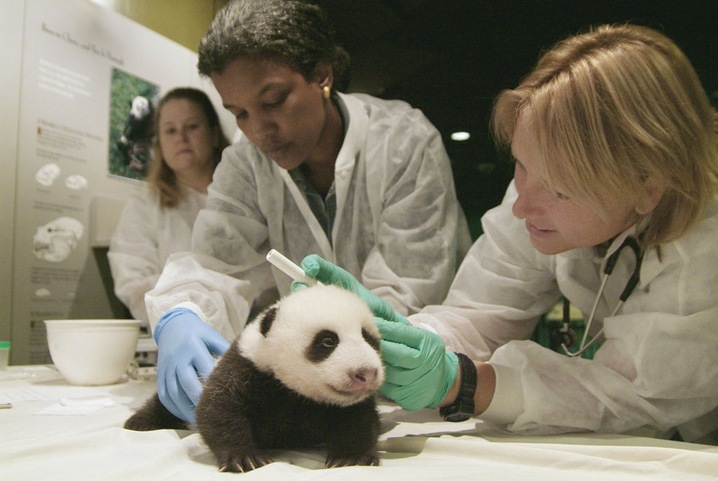 Zoo Welcomes Birth of Tai Shan