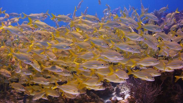 Losing Corals
