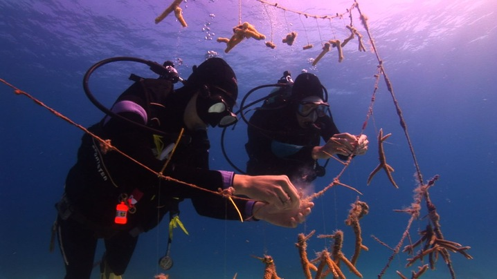 Restoring the Reef