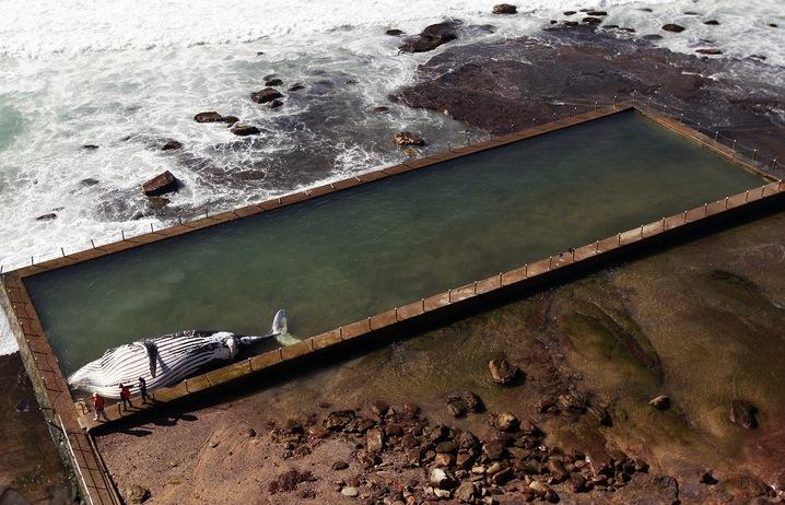 Ocean Casualty