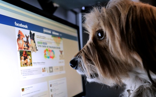 A dog looking Facebook; photo by Denis Charlet/AFP/Getty Images