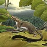 Earliest Placental Mammal Described in Breathtaking Detail