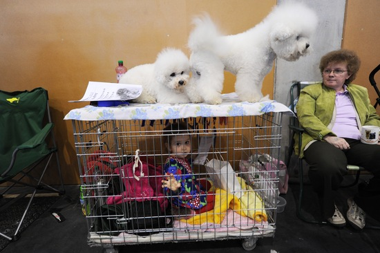Word Dog Show; photo by Attila Kisbenedek/AFP/Getty Images