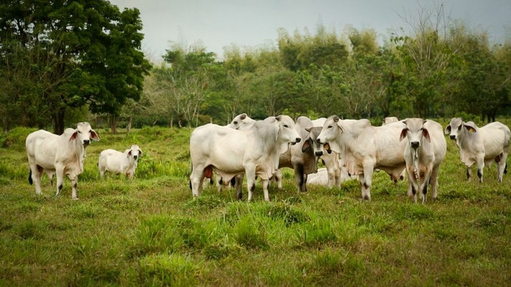 Pasture Lands