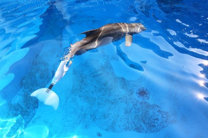 Dolphin Prosthetics