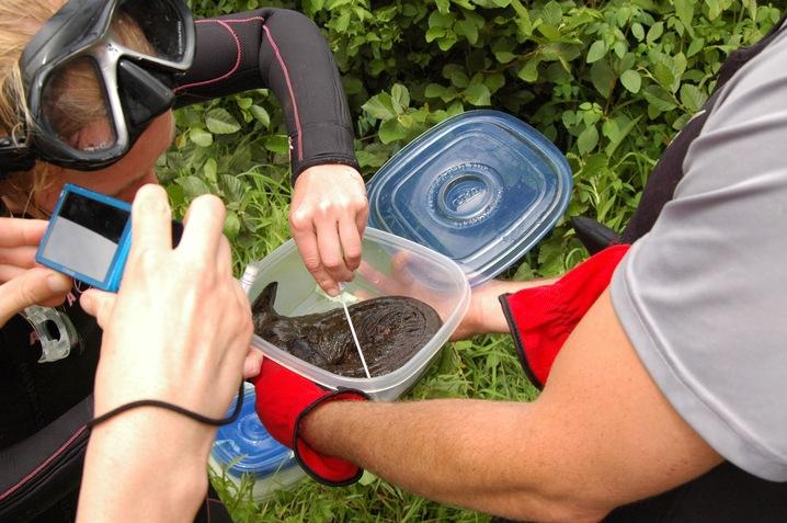 Checking for Chytrid Fungus