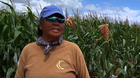 Hawaii ag worker