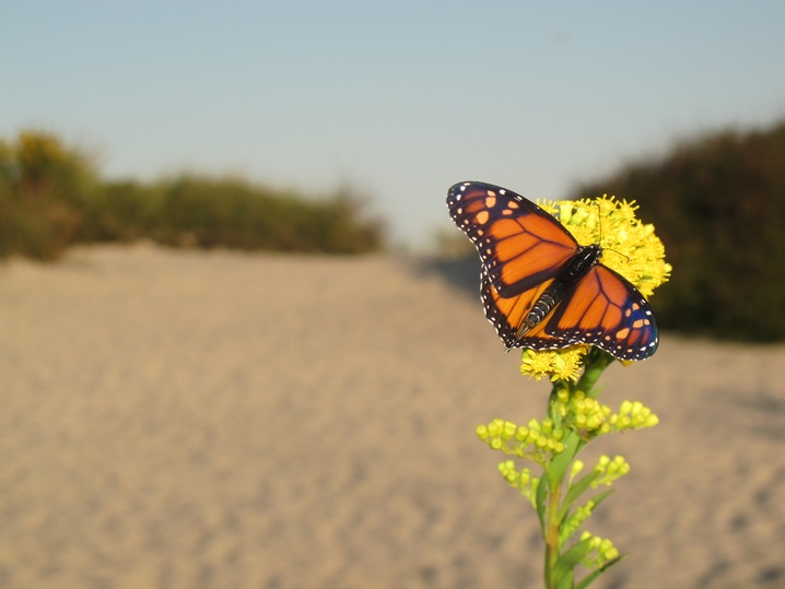 Essay on butterfly for kids